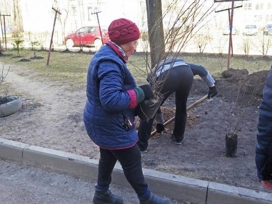 Около 700 кустов было высажено в смоленских дворах за выходные