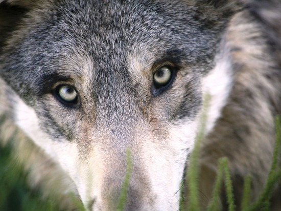 По факту смерти молодого человека от укуса собак возбуждено уголовное дело