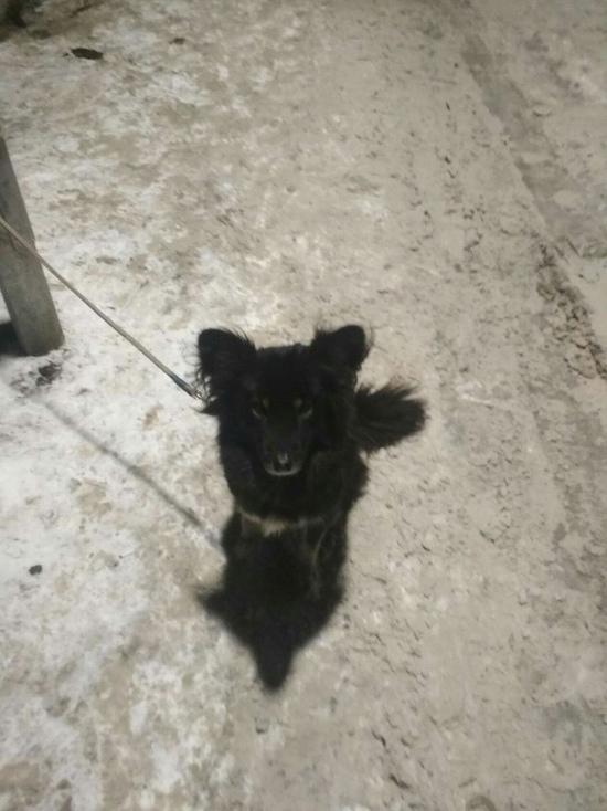 На крыльце торгового центра у тулячки украли собаку