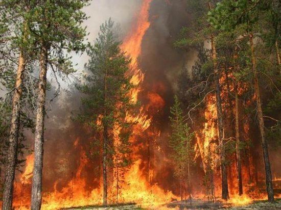 Анюйский заповедник в Хабаровском крае оказался в огне