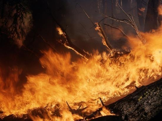 Площадь пожаров в Забайкалье увеличилась до 3,8 тыс га