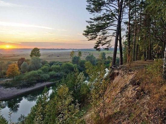 Дело лесничего за случайную рубку леса в нацпарке на 5,5 млн передано в суд