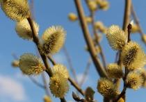 На Вербное воскресенье, 21 апреля, синоптики обещают в Москве настоящую весну — солнце и +16 градусов