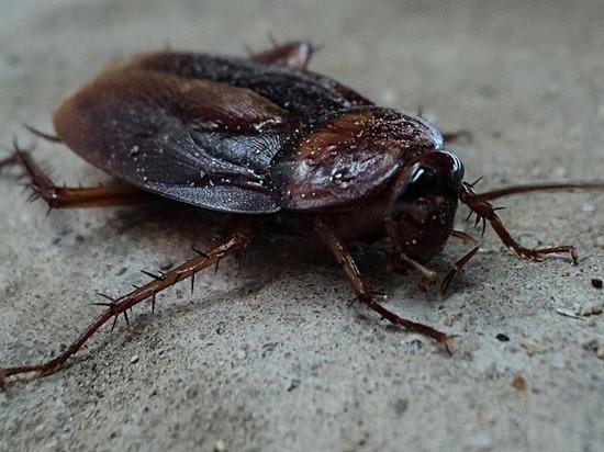 Крысы и тараканы довели «Домашнюю столовую» в Казани до штрафа