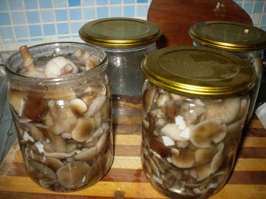 В Тамбовской области зафиксированы первые случаи отравления грибами