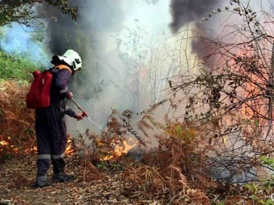 Огонь уничтожил более 2,5 тыс. га в хабаровском заповеднике