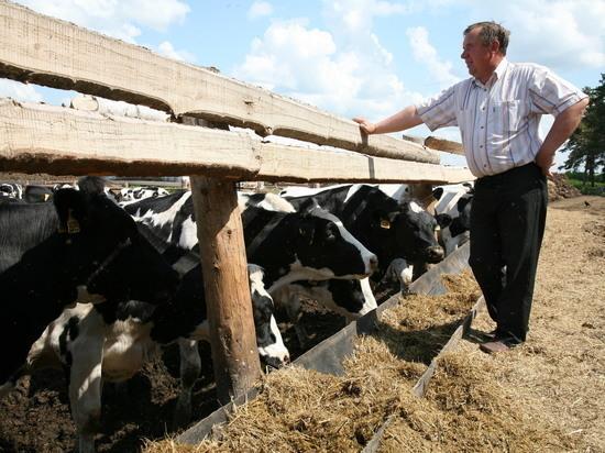 В кузбасском животноводстве началась смена формаций