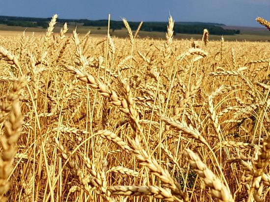 Из Крыма в Сирию планируют поставить около 240 тыс. тонн зерна