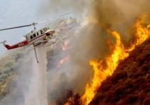 В Черняховском районе сгорел лес — условно