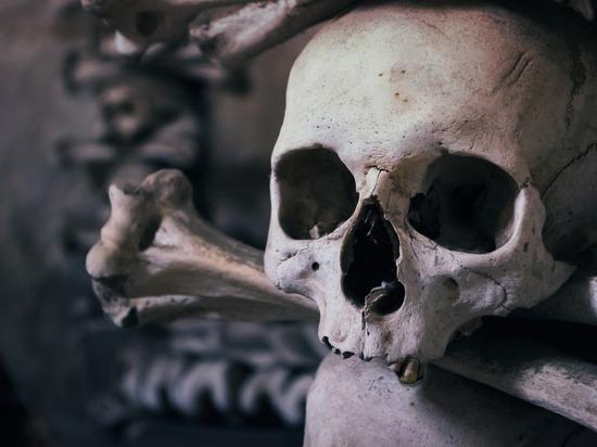 Человеческие скелеты на юге Москвы начали находить с пугающей частотой