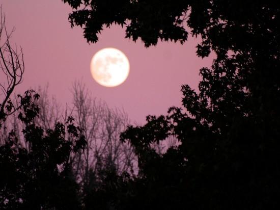 Астрологи рассказали, что предвещает «розовое полнолуние» 19 апреля