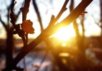 В Воронеже ожидаются ясные и теплые выходные