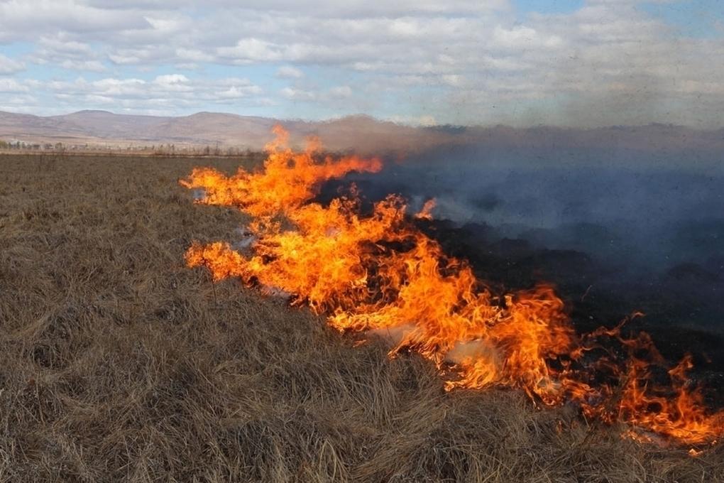 зверь картинка степного пожара вовремя