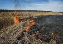 Рядом с Ярославским НПЗ неизвестные подожгли поле с сухой травой