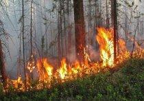 Природные пожары в Забайкалье горят на площади более трёх тысяч га