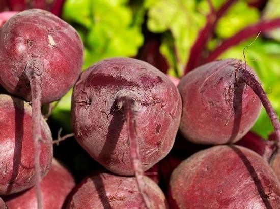 Агрономы назвали популярные у волгоградцев сорта свеклы