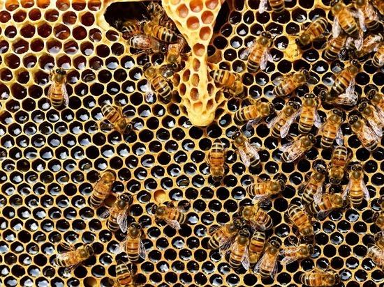 Пчелы Нотр-Дама чудом выжили при пожаре