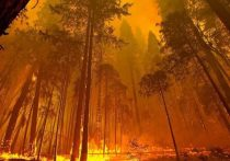 В 3 раза увеличилась площадь природных пожаров в Забайкалье за 9 часов