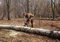 Глава Тульской области принял участие в уборке Рогожинского парка