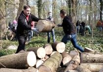 Мэрия Калининграда предложила жителям города бесплатные дрова