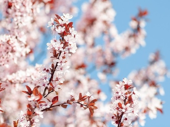 Теплую и безветренную погоду при +15°С обещают волгоградцам 21 апреля