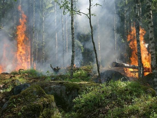 В Псковской области ожидается чрезвычайная пожарная опасность