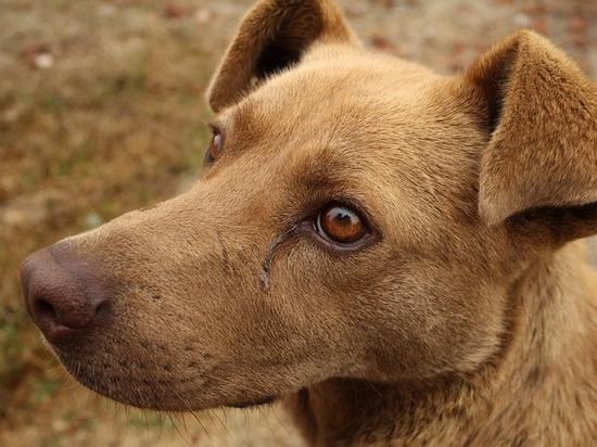 В Алтайском крае «обчистили» сельский приют для животных