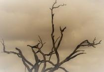 МЧС: Ветер с порывами до 23 м/сек ожидается 22-23 апреля