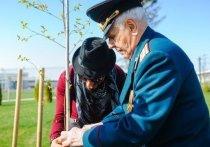 Березка из Волгограда будет расти в Катаре