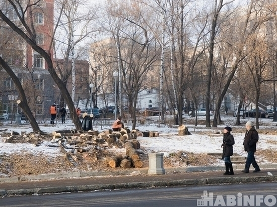 Хабаровчанка пожаловалась депутатам на снос деревьев в городе