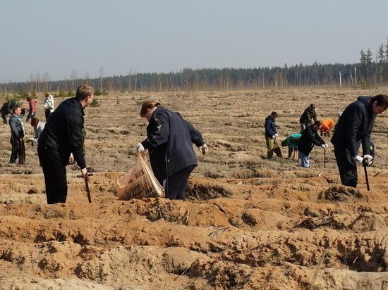На прошедших выходных под Воронежем высадили 3 гектара нового леса