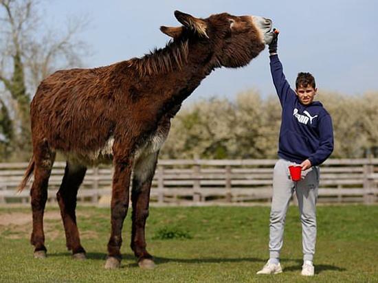 В Британии отыскали гигантского осла