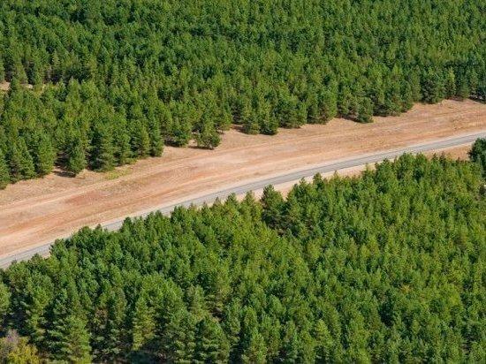 Вокруг трех городов Волгоградской области появятся «зеленые пояса»