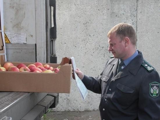 Белорусские яблоки пытались ввезти в РФ, спрятав под картошку