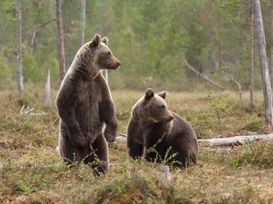 Экотропа Забайкалья: вольер дрофы, медвежье логово и скалы
