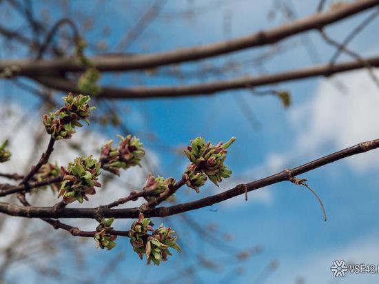 Кузбасские синоптики рассказали прогноз погоды на май