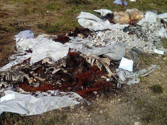 На калужском предприятии образовалась свалка биологических отходов