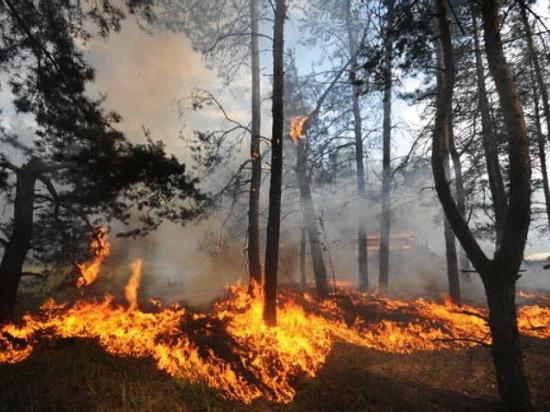 В Воронежской области готовятся к лесным пожарам