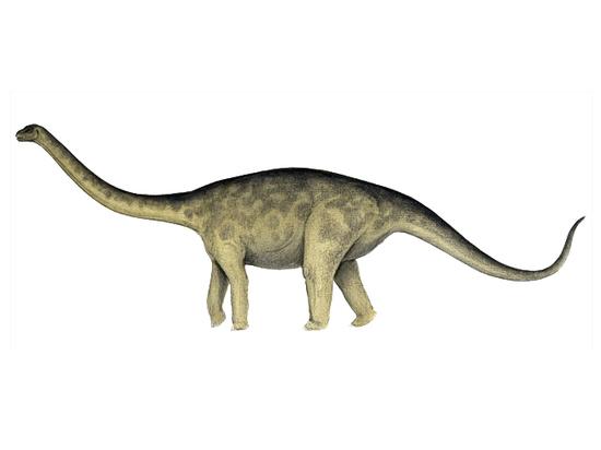 Открыт гигантский динозавр, «ходивший на цыпочках»