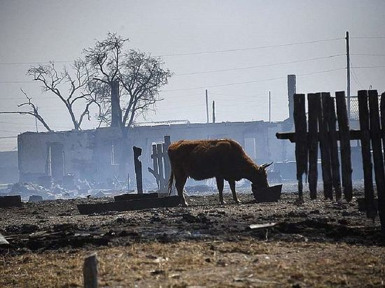 Почти 12 тыс животных и 8 тыс тонн кормов сгорели в Забайкалье