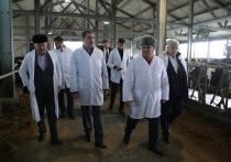 Фирменные магазины местных фермеров откроют по всей Ингушетии