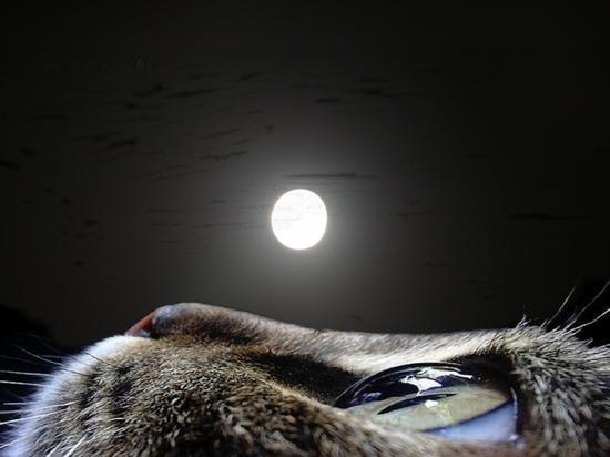 Израильтянка предъявила права на участок Луны