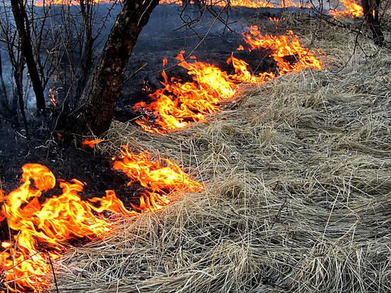 МЧС Мордовии за сутки 88 раз выезжали тушить сухую траву