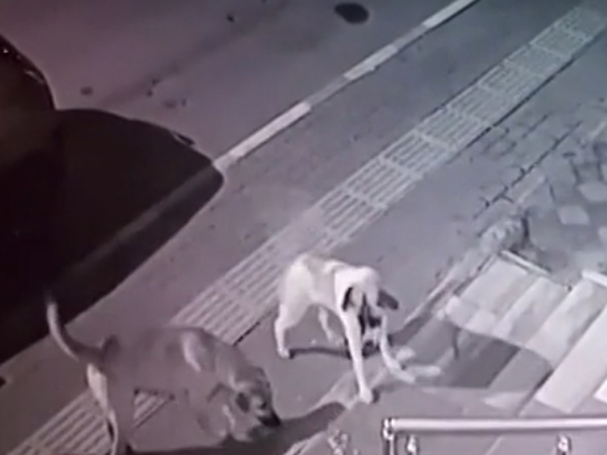 Псы еле унесли ноги