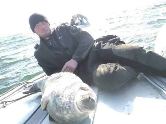 Жителям Калининградской области посоветовали не кормить тюленей