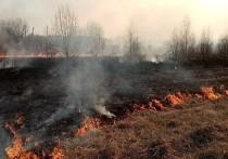 В Чувашии в сгоревшей траве нашли тело мужчины
