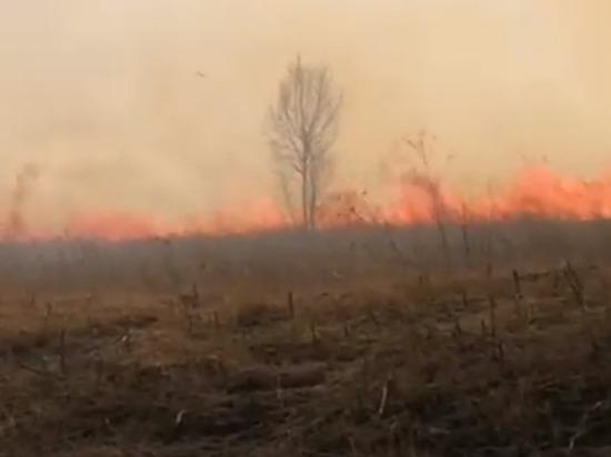 «Просто ужас»: на Дрокинской горе загорелась трава