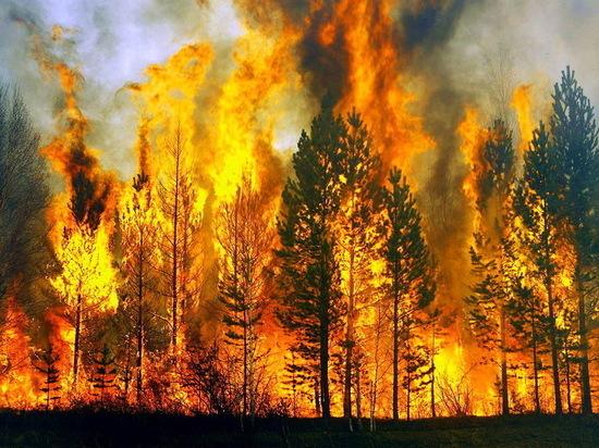 В Воронежской области устанавливают особый противопожарный режим