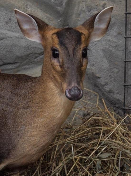 Зоопарк Калуги пополнился сразу несколькими редкими видами животных