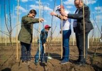 Крупнейший в России грушевый сад появится в Карачаево-Черкесии